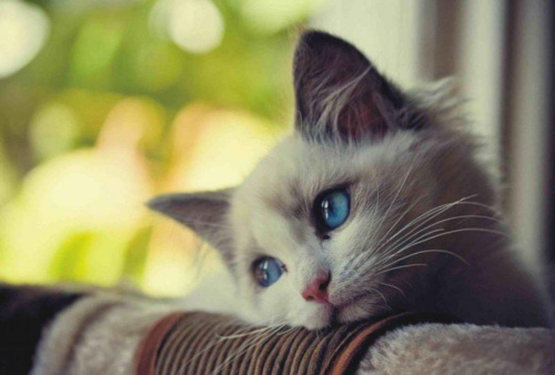 kata kata sedih dan galau karena cinta
